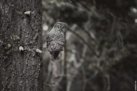 OwlSpotting3