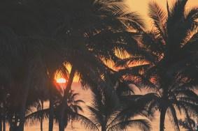 palmssunrise