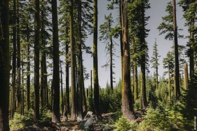 treesmossy
