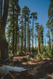 treestall2