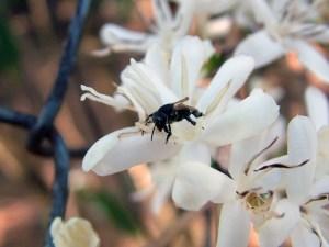 abelha-cafe2