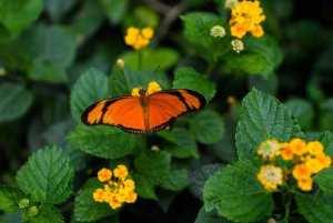 borboletário Fiocruz