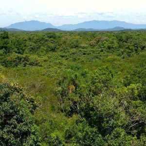 floresta-secundária