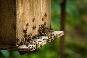 abelhas-caixa-2-reduzida
