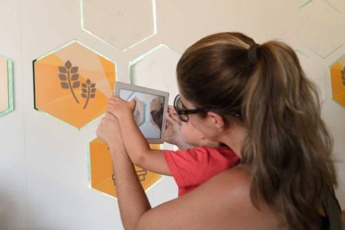 ciencia-amiga-das-abelhas-2-credito-cgee-red