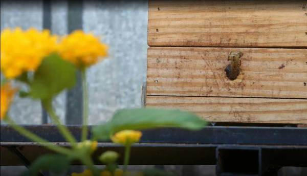 viveiro-DF-bosque das abelhas
