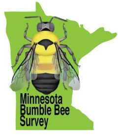 minnesota bumblebee survey