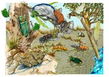 biodiversidad-de-artropodos-argentinos-algunos-aspectos-sobre-el-estado-de-conocimiento.jpg_640_640