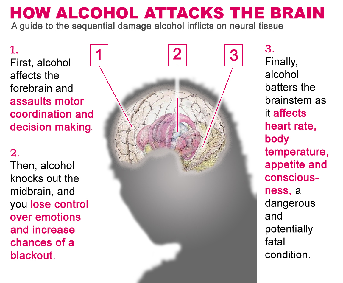 Alcohol S Damaging Effects On The Brain Abenaitwe Cliff