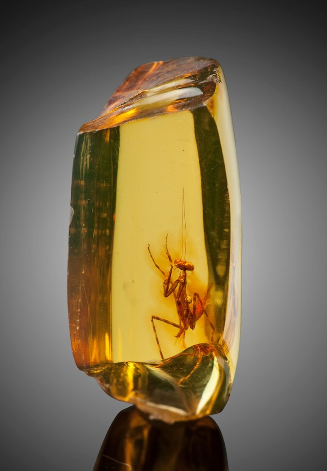 praying-mantis-amber-heritage-auctions-4