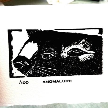 Anomalure