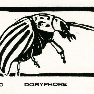 Doryphore