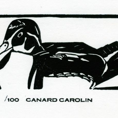 canard carolin