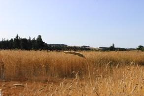 Via-Podiensis-2013_1094
