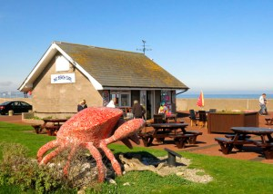 Pensarn beach crab by the Beach Cafe, Pensarn. Cranc ger y bwyty ar lan y môr, Pensarn. Photo by Sion Jones, 2014