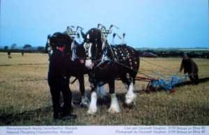Abergele National Ploughing Championship. Photo by Gwyneth Vaughan of Betws yn Rhos Women's Institute