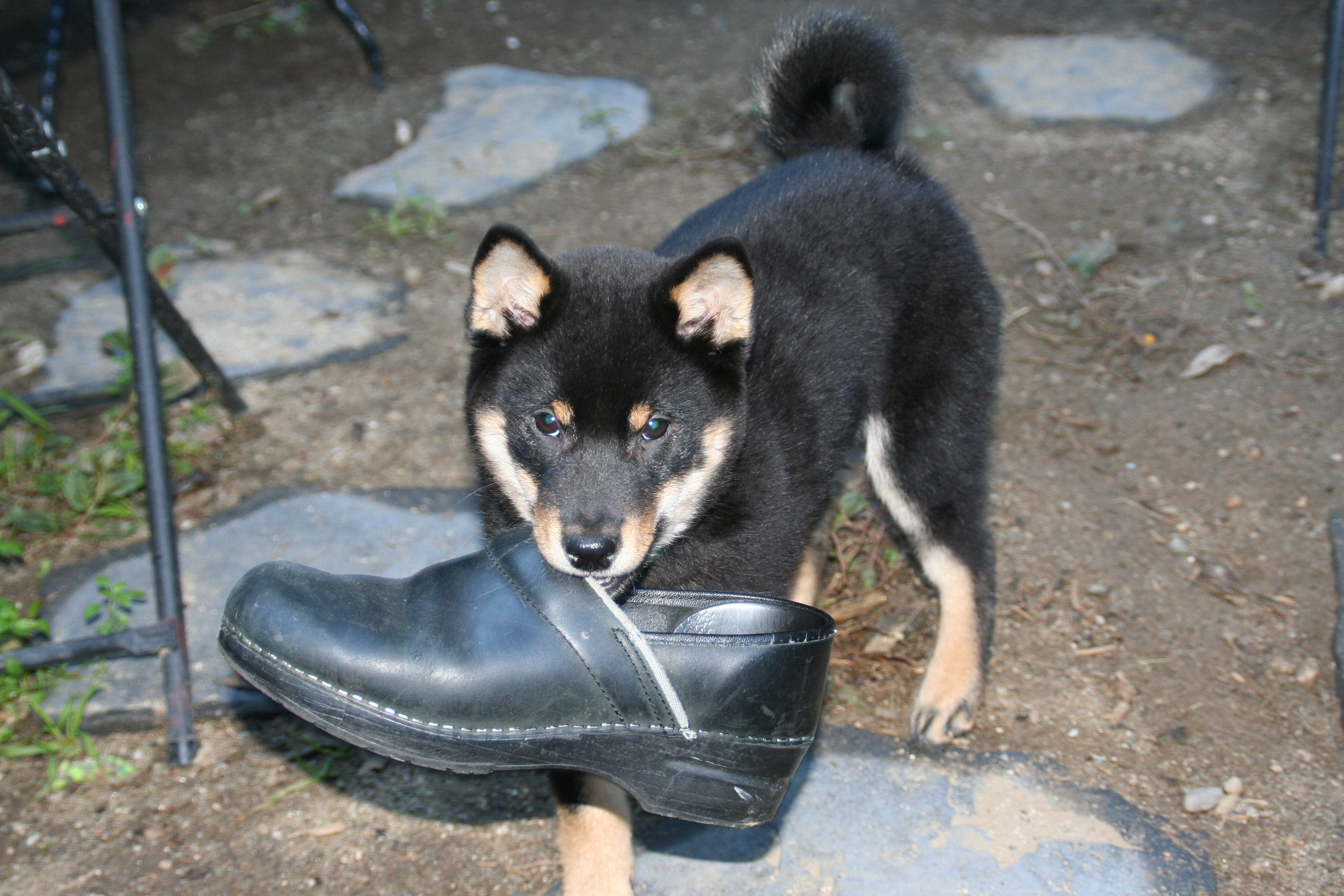 Bosco, the wonder dog