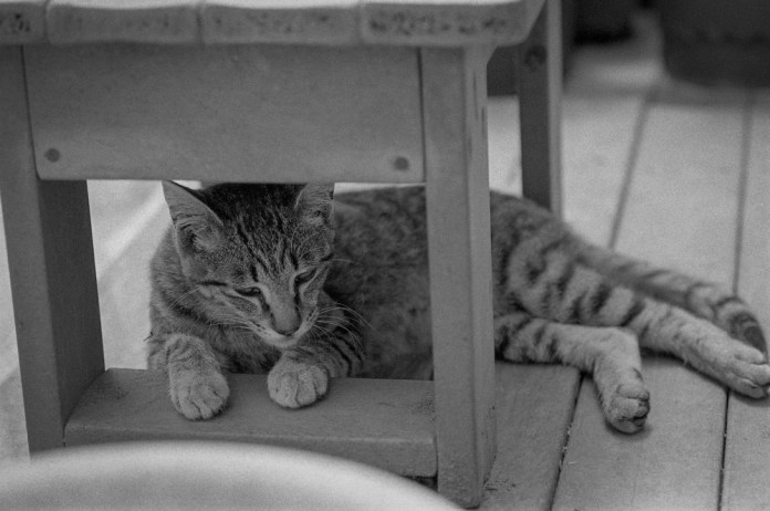 TAMRON SP AF Di 90mm ILFORD HP5