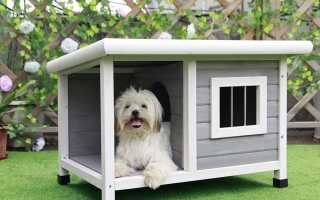 Top 10 Best Dog House 2018 Review