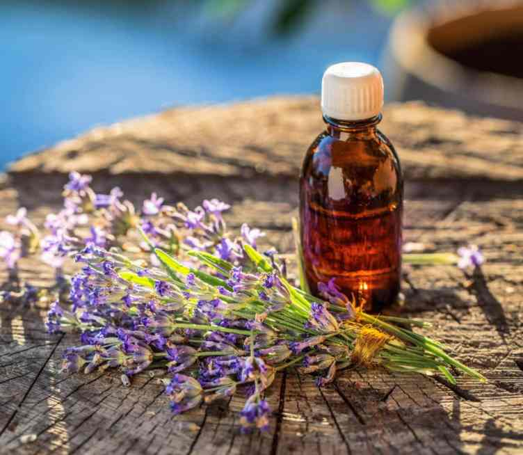 Essential oil bottle with lavender herb