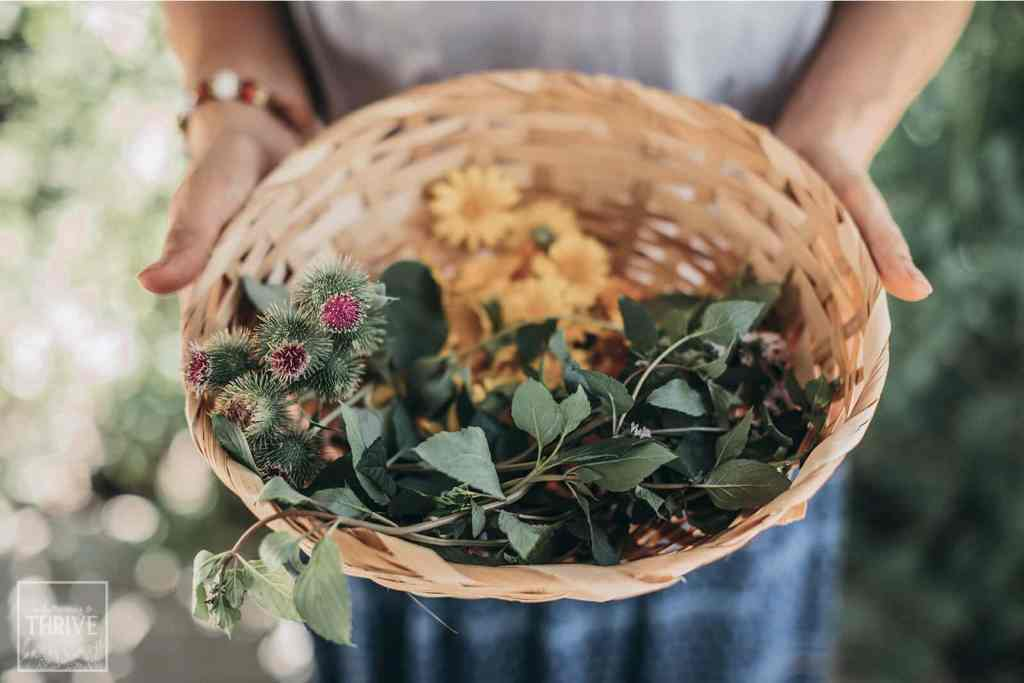medicinal herbs in a basket