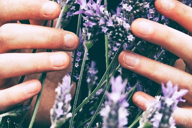 Learn how to start using herbs, essential oils, and natural remedies without spending too much or always feeling confused.