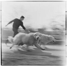 1968 Vágta - Photo: Eifert