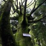 <!--:en-->Les Vosges<!--:--><!--:nl-->Vogezen<!--:-->