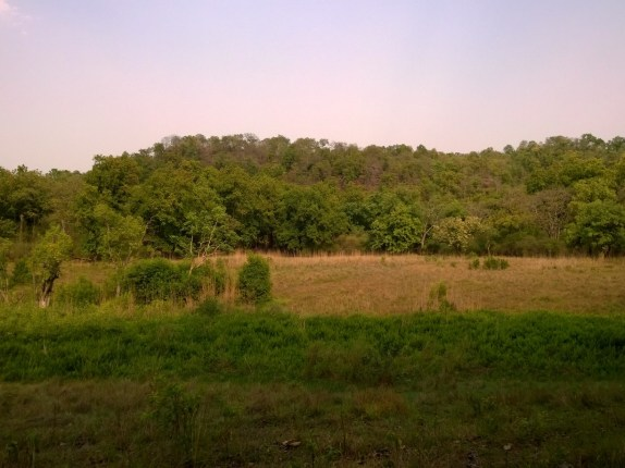 Beautiful Bandhavgarh!