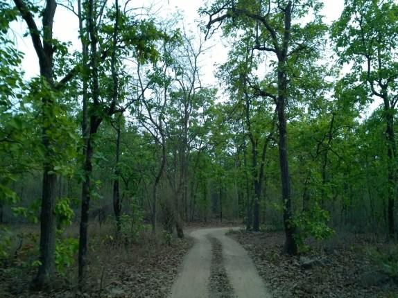 Safari trail in Khitauli