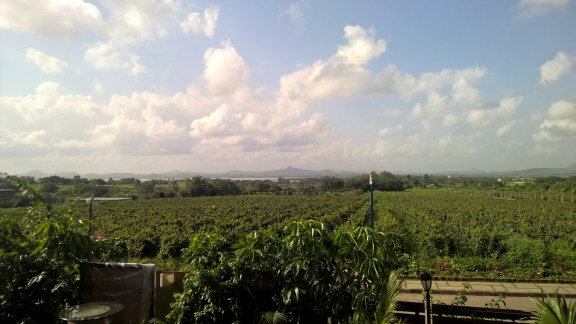 View of the vineyards!