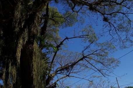 tout un monde sur les troncs des arbres