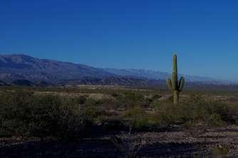 au milieu des cactus