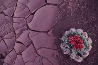 C'est tout ce qu'on aura vu du désert fleuri, malgré la pluie... Le sol a déjà absorbé toute l'eau et forme des plaques qui se relèvent et se brisent comme des feuilles mortes lorsqu'on marche dessus.