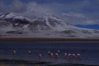 La magnifique Laguna Cañapa, avec les flamants roses qui apportent une touche de couleur dans ce monde en noir, bleu et blanc...