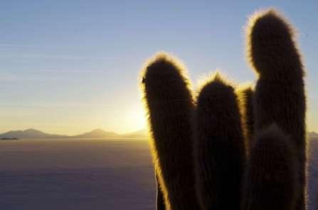 Cactus millénaire, poussant lentement dans cette oasis de vie au milieu de tout ce rien