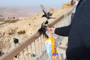 Israel Raven 2