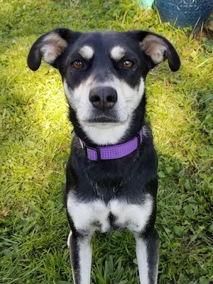 Abbie's rescue dog, Nova