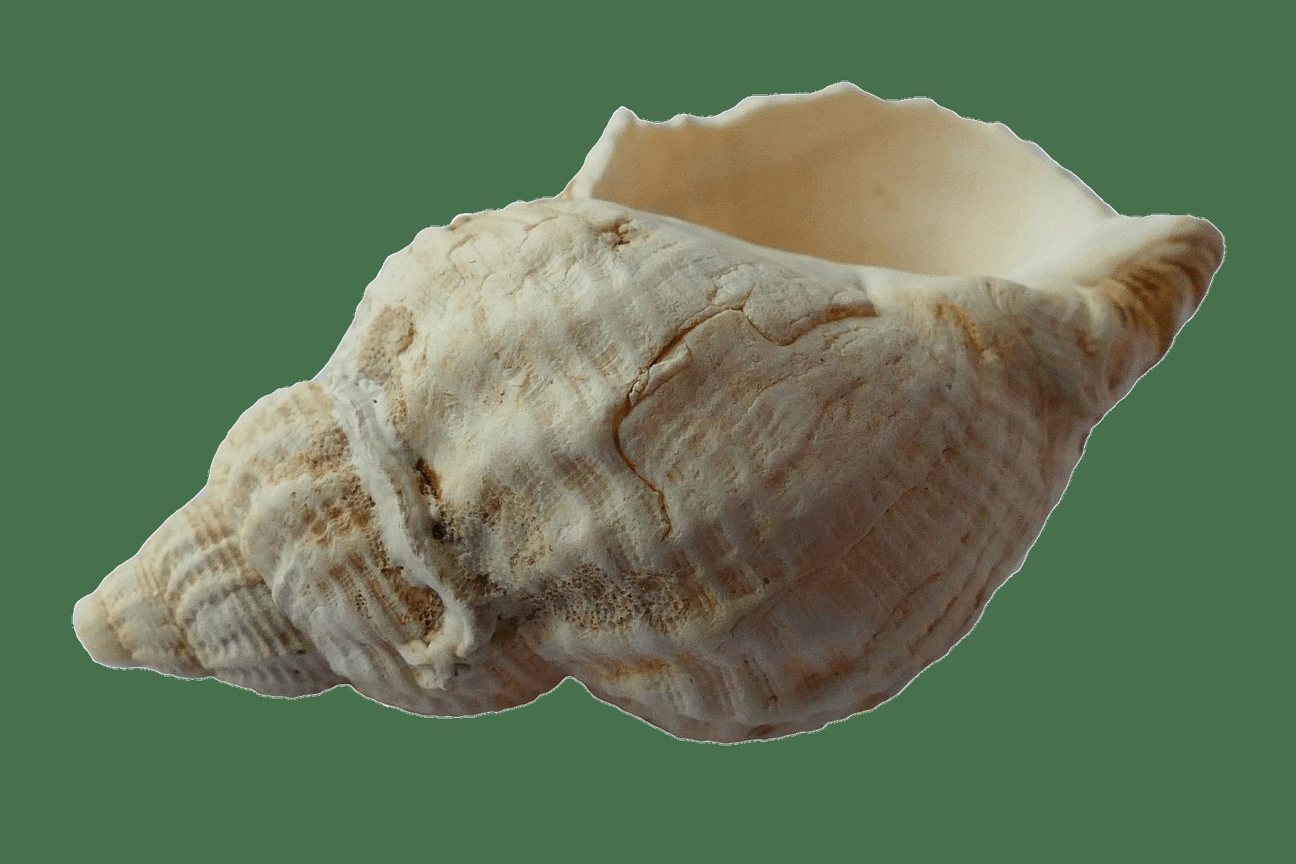 blur close up conch decoration