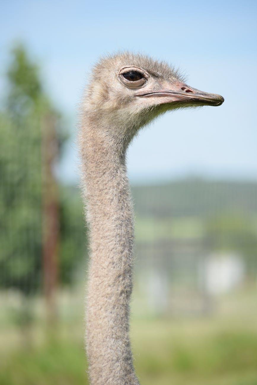 brown ostrich in tilt shift lens