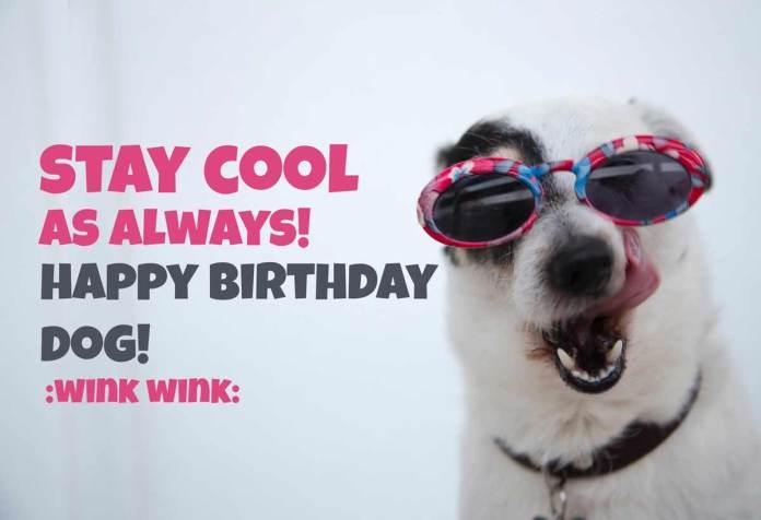 Cool Dog Birthday Meme