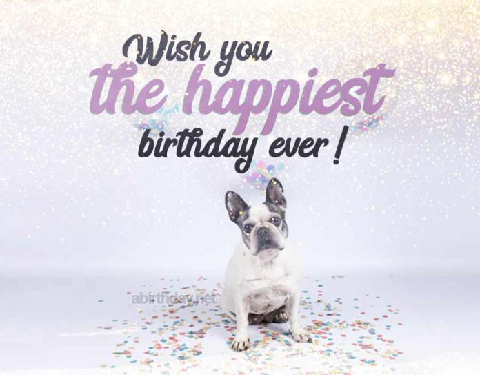 French Bulldog Birthday Meme