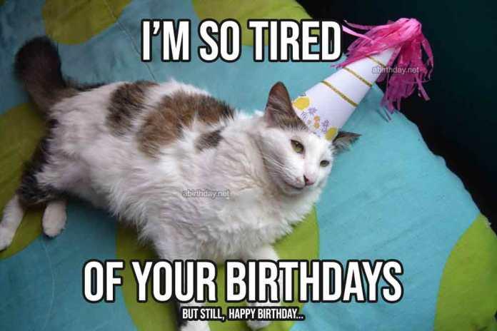 Lazy Cat Birthday Meme