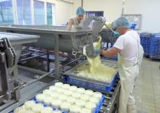 Het afvullen van de kaasvormen