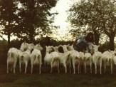Geitenboer met 14 geiten in 1983