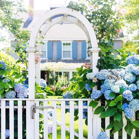 Gorgeous Blue Hydrangeas + a dreamy yard
