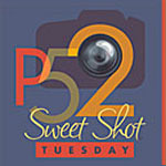 Projektbutton sweet shot Tuesday von kentweakleycom