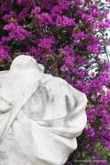 Bouganville and bust at Villa Giulia, Palermo