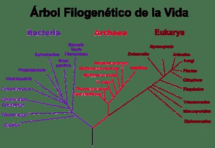 phylogenetic_tree-es.png