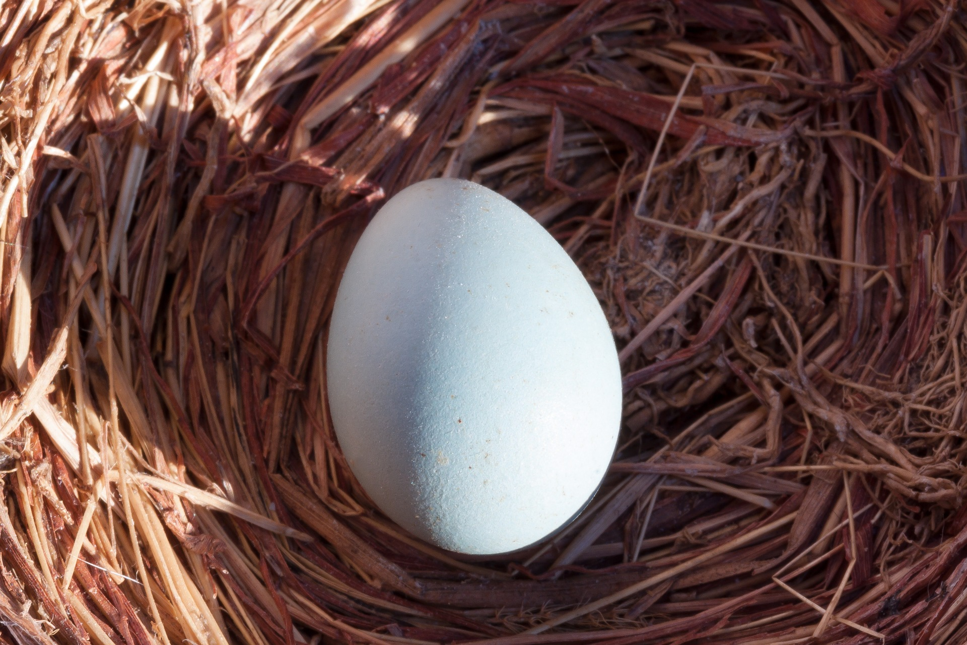 Protecting Your Nest Egg in a Recession